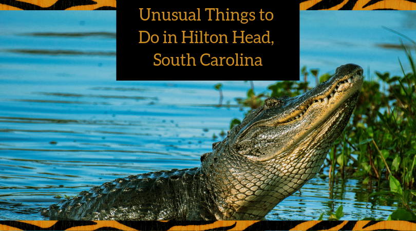 Unusual Things to Do in Hilton Head, South Carolina - AAA